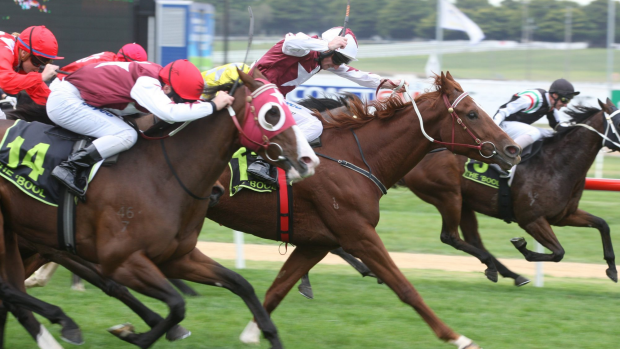 Article image for RSPCA renews calls to ban the whip in thoroughbred racing