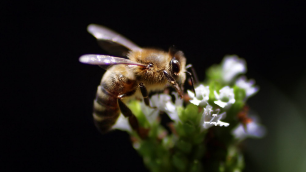 Article image for Beekeeper tells Neil Mitchell there's no science to say honey cures allergies