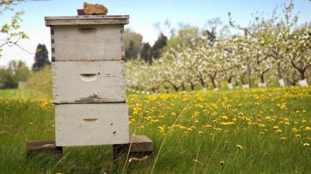 Article image for 55 Bee Hives stolen from a farm at Castlemaine