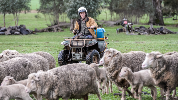 Article image for Australian farming production expected to exceed $60 billion
