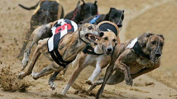 Article image for Lara property raided by Greyhound Racing Victoria