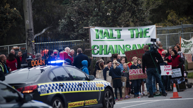 Article image for Protesters gather at Beaumaris High School to halt removal of over 200 trees