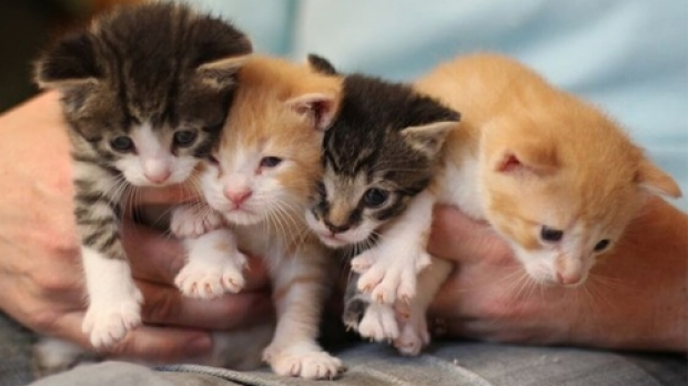 Article image for RSPCA needs help with cats and kittens