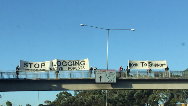 Article image for Logging protesters hold banners above the Tullamarine Freeway