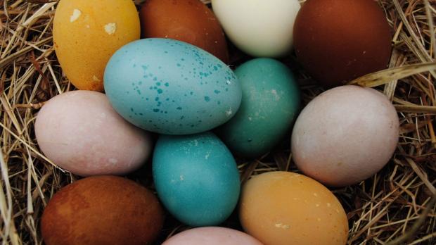 Article image for RUMOUR CONFIRMED: Manager mistakenly picks up 500 eggs instead of Easter eggs