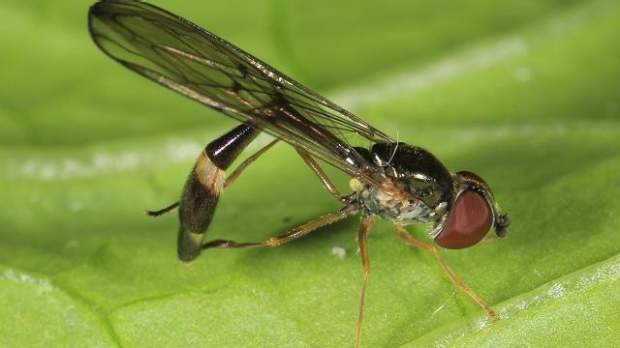 Article image for Ross and John find out why hoverflies have invaded Melbourne