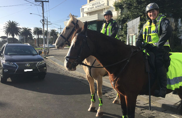 Article image for Police horses hit the streets of St Kilda!