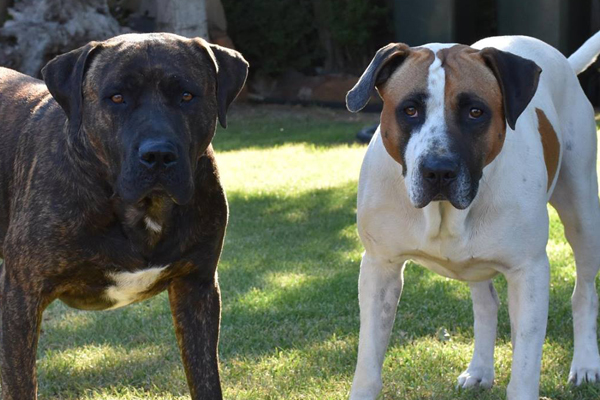 Article image for Heartless drunk steals good Samaritan's ute and dogs