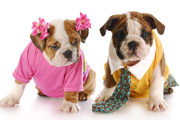 Article image for Don't dress up your pets: RSPCA