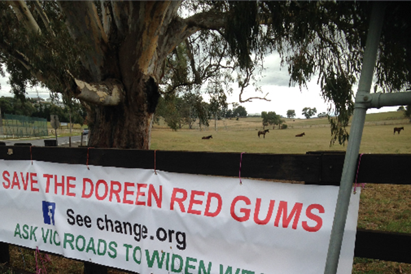 Article image for Campaign to save 400-year-old Red Gums in Melbourne's outer-north