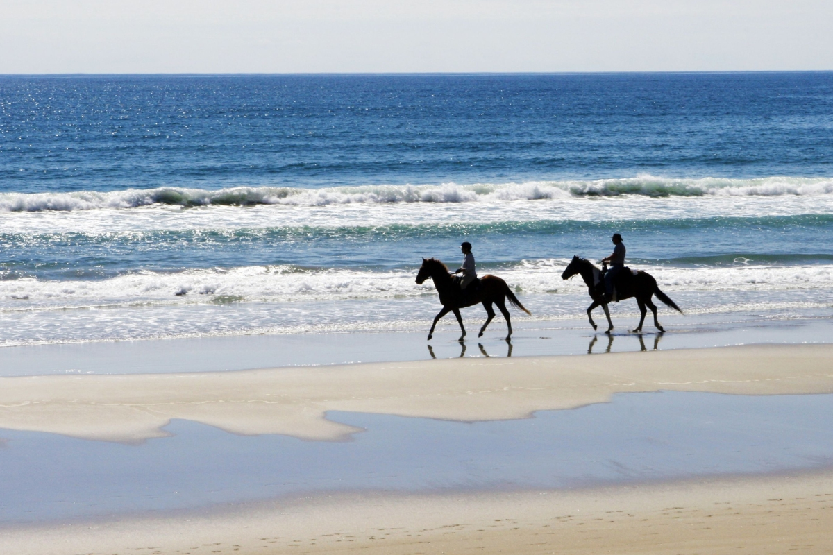 Article image for Environmentalists fight against horse trainers riding along Warrnambool beaches