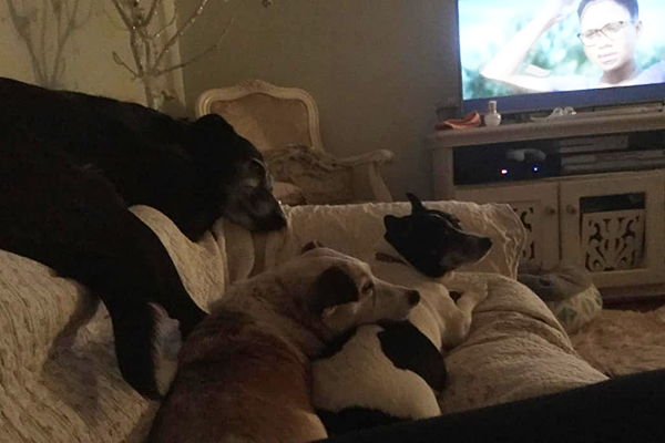 Article image for Rumour Confirmed: Four pet dogs poisoned in disturbing 'robbery plot'