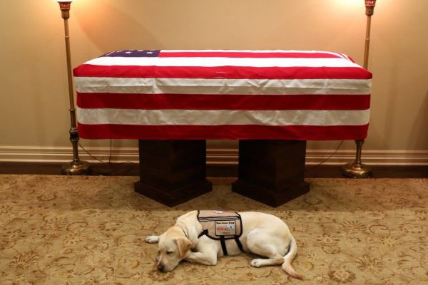 Article image for Heartbreaking photo of George H.W. Bush's service dog lying by his casket goes viral