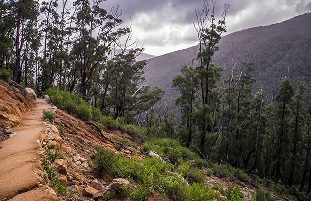 Article image for Rescue operation begins for lost hiker in Wilsons Prom