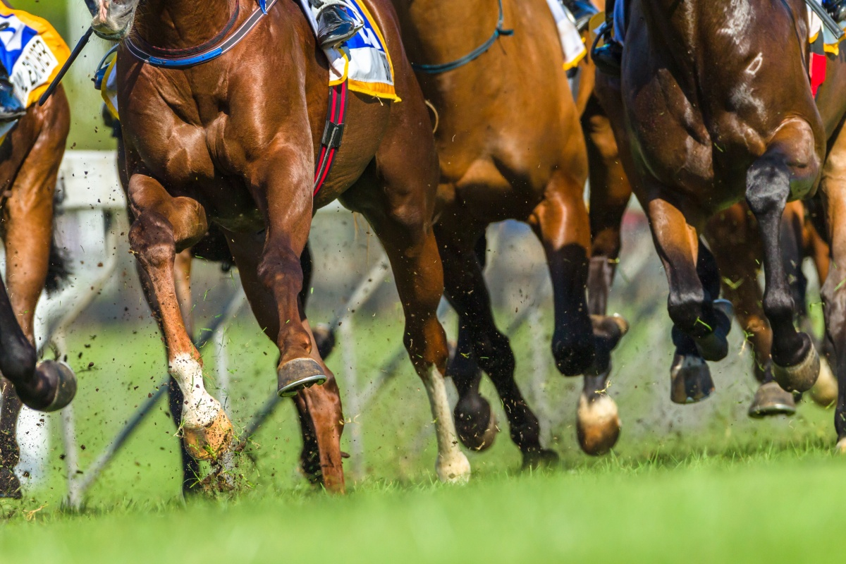 Article image for 'We can't abandon them': Why racing is different to 'other sports' during coronavirus crisis
