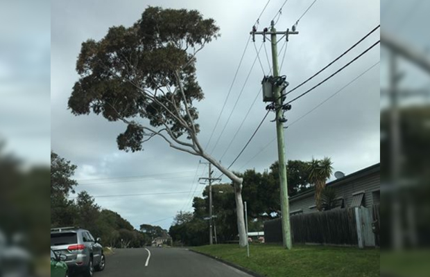 Article image for Tree trimmed to avoid powerlines now has 'dangerous' lean