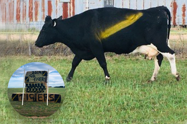 Article image for This Bairnsdale farmer might be Richmond's biggest supporter