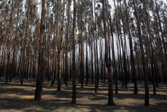 Forestry sector warns industry will take years to recover from fires