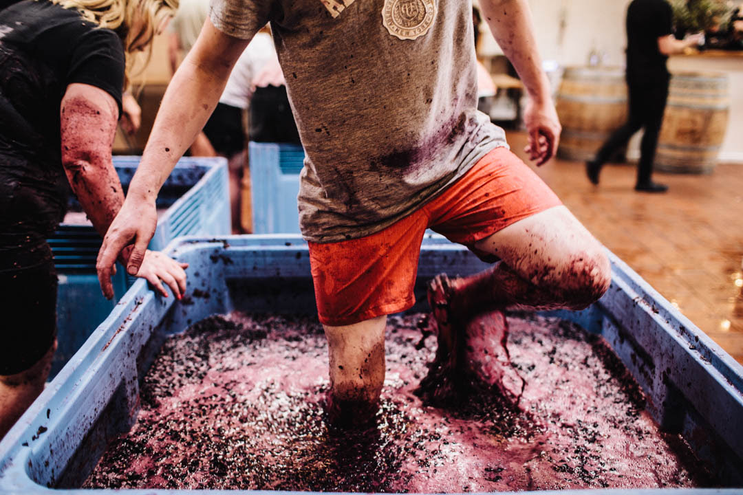 Article image for This Week in Food: Hands on winemaking + explore a mysterious suburb