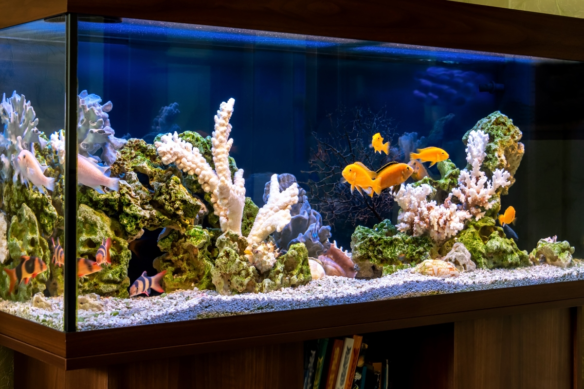 Article image for Animal rights activists urge aquarium restaurant to stop serving seafood