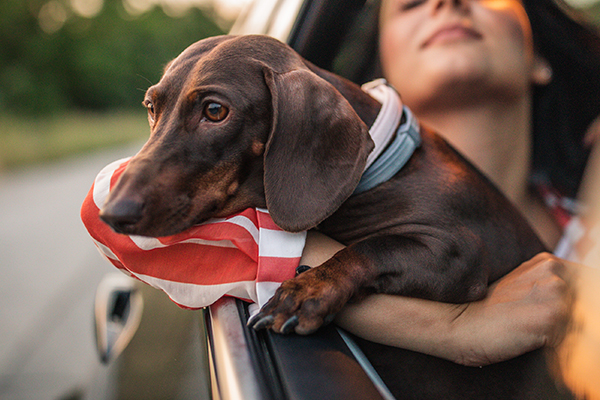 Article image for The problem with Uber allowing pets to come along for the ride