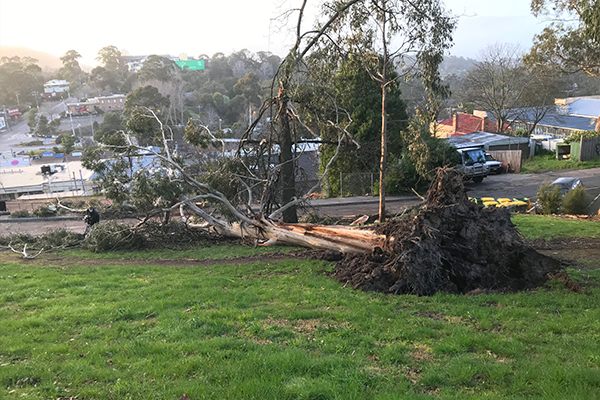 Article image for Triple tragedy: Three killed as wild winds ripped through Victoria