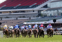 'Devastated': Calls to ban the whip after another Melbourne Cup tragedy