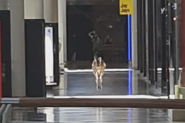 Article image for VIDEO: Kangaroo hops through Melbourne shopping centre