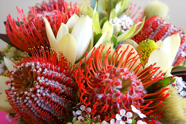 Article image for Native Australian flowers are being grown overseas and imported for sale