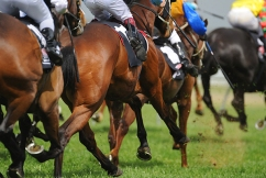 Saturday racing tips with Reece Crowther