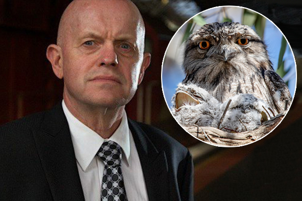 Article image for Sly: Why a St Kilda woman called police over a tawny frogmouth