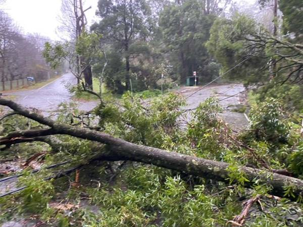 Article image for What the Nationals want to see happen to fallen trees in storm recovery