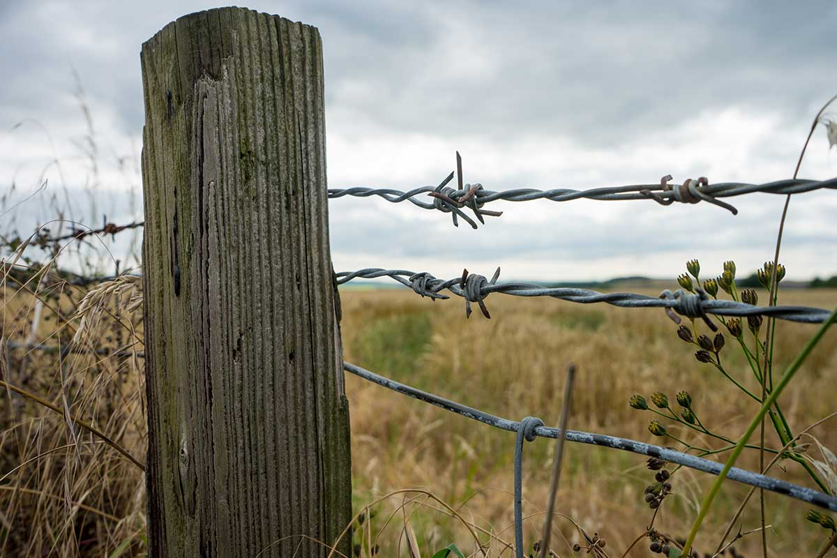 Article image for Farmers react to 'uneducated' bid to ban barbed wire fencing