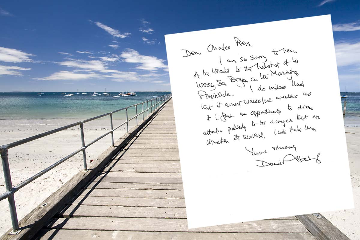 Article image for David Attenborough pens handwritten letter to save a Victorian pier