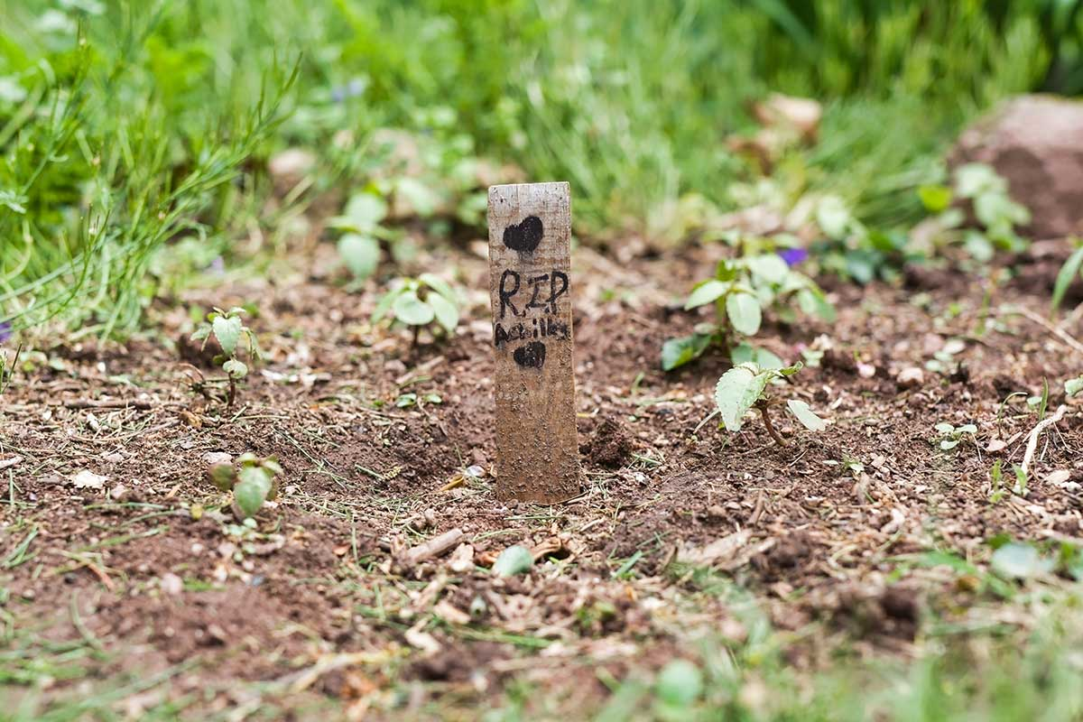 Article image for Why an increasing number of Australians are digging up their dead pets